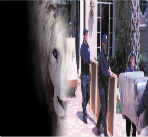White-Lion-Movers-Fort-Lauderdale-image2