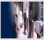 White-Lion-Movers-Palm-Beach-image2